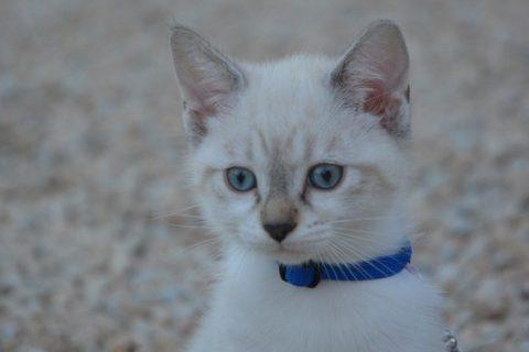 GPS chat : en quoi la localisation de votre chat est-elle utile ?